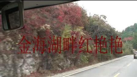 金海湖畔红艳艳