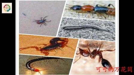 端午前后的六种毒虫