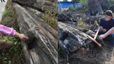 渔民江中捞到烂木头价值千万