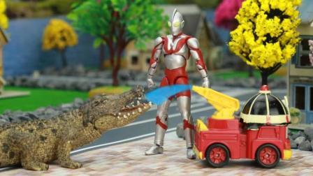 『奇趣箱』奥特曼帮小趣、小猪佩奇、超级飞侠乐迪赶走了大鳄鱼