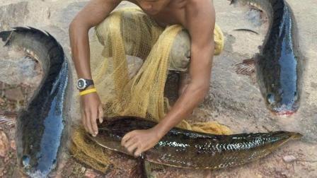 水稻里水不深, 放2条塑料管到里边, 竟收获了几条大鱼