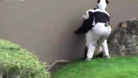 """熊猫 呆萌大熊猫""""为难""""日本动物园管理人员"""