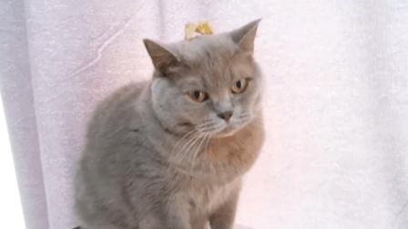 遇到这么不靠谱的主人, 猫咪真的很无奈, 主人吃果肉, 猫咪却只能吃皮