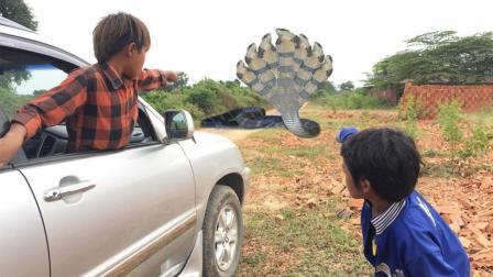 爸爸开车带孩子们去赶集, 半路竟杀出一条大蟒蛇, 令人害怕啊!