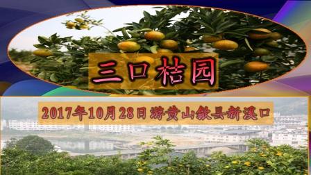 2017年10月28日游黄山歙县新溪口三口桔园