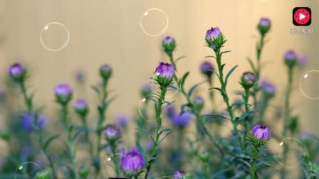 降央卓玛《我和草原有个约定》一首值得单曲循环的经典歌曲
