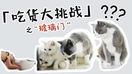 吃货大挑战 | 为了好吃的, 猫咪居然可以做到这样? !