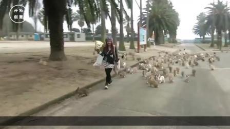 俄罗斯动物成灾, 看了一下在中国的遭遇, 他们沉默了