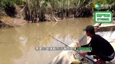 钓鲫鱼调标视频小伙1人控3杆钓鱼春分季节野钓鲤鱼技巧