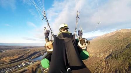 一起玩乐一起飞! 滑翔伞大神带两只狗狗天空翱翔
