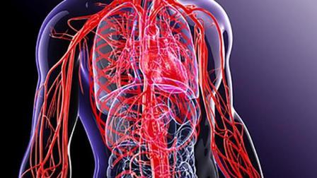 一个人的血管有多长? 拉出来能绕地球4圈!