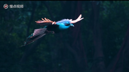 【慢下来,看动物】慢镜头看孔雀飞,独一无二的美
