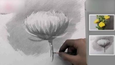 素描图片大全简单漂亮素描基础入门教程基础素描静物写生菊花4人体素描