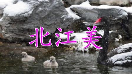 王馨《北江美》广场舞爱好者非常喜欢的一首歌曲