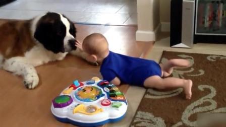 宝宝爬向狗狗摸它的鼻子, 接下来狗狗的举动让人暖化了