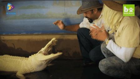 【鳄鱼饲养员】印象里的鳄鱼都是凶残面孔, 鳄鱼女王带你揭秘鳄鱼不为人知的一面
