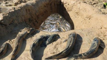 童年的抓鱼陷阱, 3个男孩湖边挖个大坑后, 竟然抓到这么多鱼