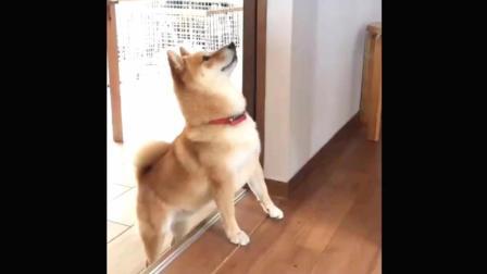 狗狗真聪明, 吃东西钱要这样