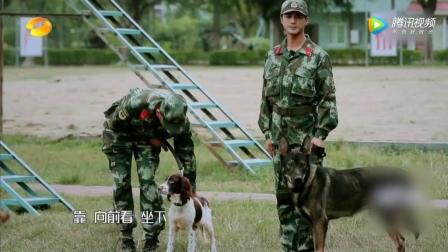 涉水训练警犬全体大惊慌, 张馨予摔倒被爱犬救起太感人了!