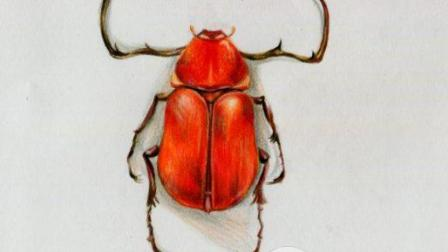 彩铅画基础教程—写实甲壳虫