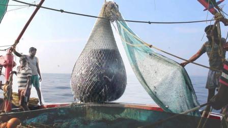 渔民开轮船一次出海捕捞10吨沙丁鱼, 最后都被人类吃到肚子里