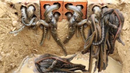 3个农村男孩挖了个大洞当陷阱, 第二天往洞里一看, 竟吓一大跳!