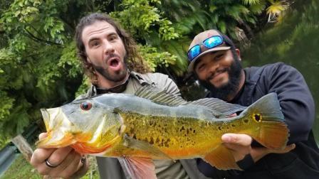 老外在野外钓鱼, 大鱼像饿疯一样频频咬钩, 这样钓鱼实在太爽了