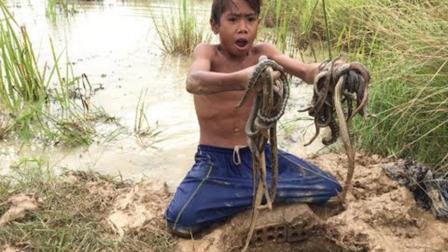 农村男孩野外捕蛇, 自制陷阱等蛇, 仅3个小时竟钻进来一窝蛇