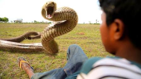 农村孩子们野外挖螃蟹, 竟遇到一条凶猛的毒蛇, 好吓人