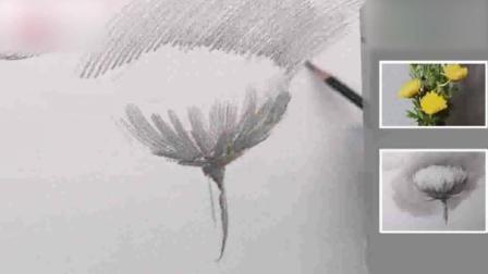 素描图片大全简单漂亮基础素描静物写生菊花2素描教学