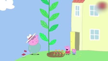 动画: 乔治种向日葵被猪爷爷表扬, 佩奇的却不一样