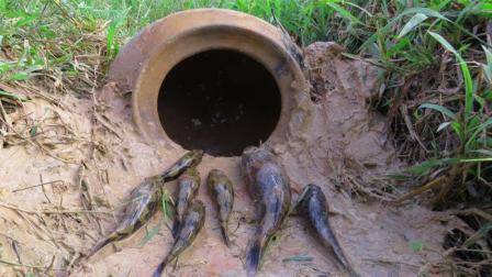 1个瓦罐, 农村小伙把它埋在水里边, 一会儿竟钻进这么多鱼