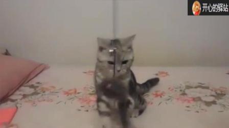 #冬日吸猫#   主人拿个老鼠调戏猫咪  猫咪玩的不亦乐乎