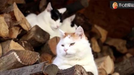 #冬日吸猫#    单身猫咪好无语    后面一对情侣猫咪非要秀恩爱