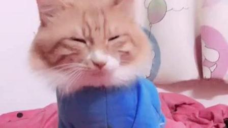 #冬日吸猫#永远也爱不够的阿猫