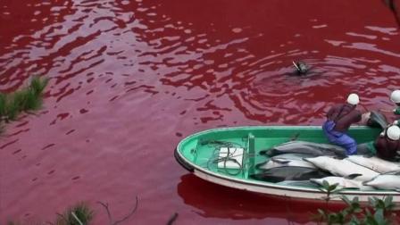 《海豚湾》为了捕海豚, 那染红整片海域的鲜血, 令人触目惊心