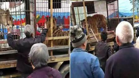 老人伸手进笼喂食马戏团老虎 手被死咬不放