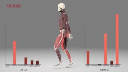 跑步腿部肌肉示意 3D动画