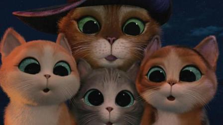#冬日吸猫#加菲猫的日常、行侠仗义的靴猫、会报恩的猫, 最萌喵星人大集合!
