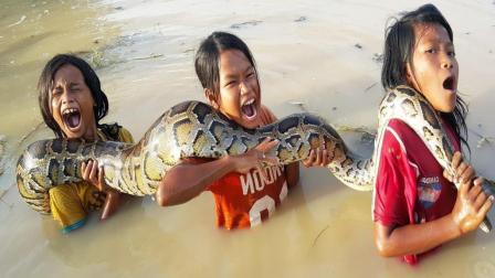 农村三姐妹田边野炊, 突然草丛中窜出一条大蟒蛇, 她们竟敢这样!