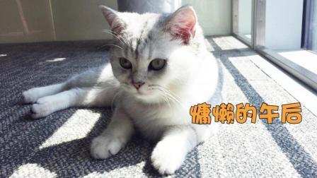 #冬日吸猫#都说猫咪爱晒太阳, 这只萌猫晒着晒着就睡着了, 睡姿好萌!