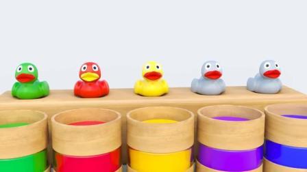 小鸭子染色后, 鸭妈妈带着彩色小鸭游泳, 学习颜色
