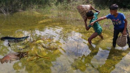 2个男孩用这个土方法抓鱼, 遇见大鱼一抓一个准, 好厉害!