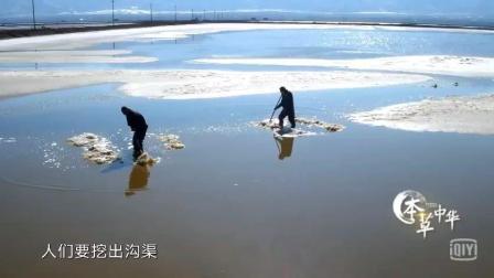 纪录片《本草中华》揭秘中华名药西瓜霜的制作过程