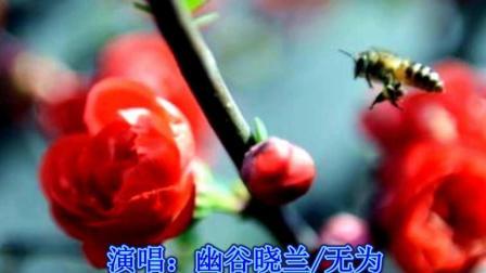 【梅花泪】-- 幽谷晓兰/无为