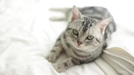 #冬日吸猫# 论撸一只王牌傲娇猫, 耐心的重要性