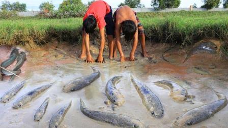 一个不起眼的大水坑, 2个男孩这样把水舀干, 大鱼抓了七八条