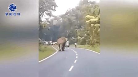 男子拍摄大象距离过近 被大象踩踏致死