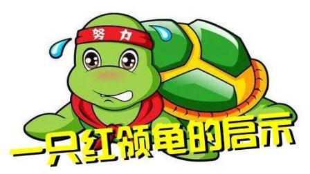 乌龟会搞笑, 还是热心肠! 《一只红领龟的启示》唱出人生真谛
