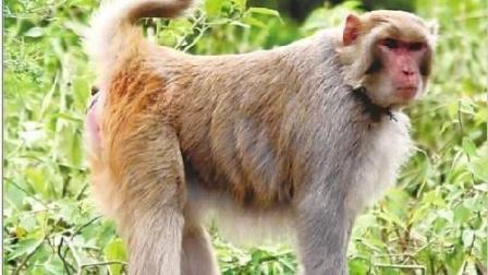 超贱猴子调戏羞辱母狗, 激怒狗狗家族, 打得满地找牙!